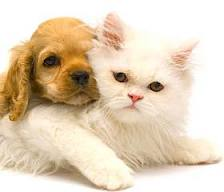 Consejos para adoptar una mascota..