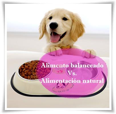 La alimentación de tu mascota…