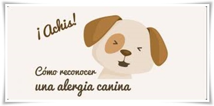 Las Alergias en los perros..