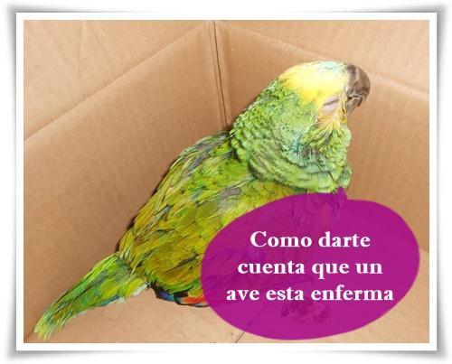 IVA te cuenta sobre aves y sus enfermedades